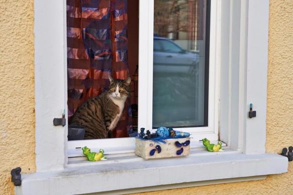 Seismik Katze
